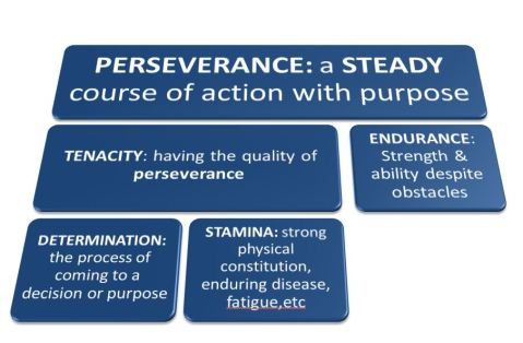 perseveranc-and-synonym-family